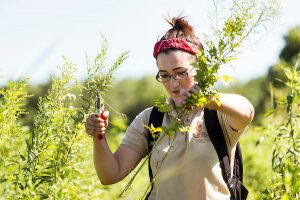 Student hand-pruning overgrown brush at her internship with the UW Aboretum